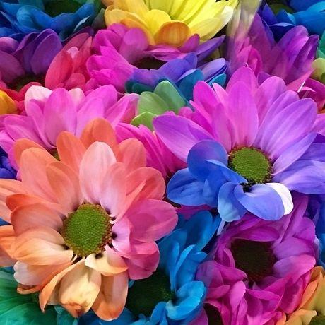 Хризантема - королева осенних цветов, фото-1